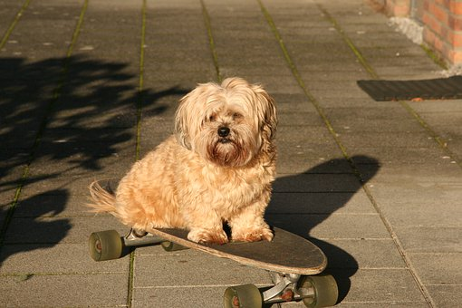 How To Teach A Dog To Ride A Skateboard